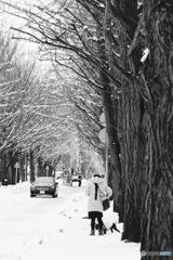 雪の北大  monochrome