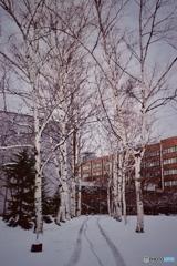 雪の北大 1