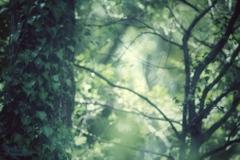 森の緑に吸い込まれ