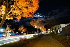 紅葉・月・流光