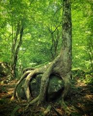 鷲掴む樹木