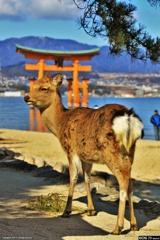 厳島神社名物