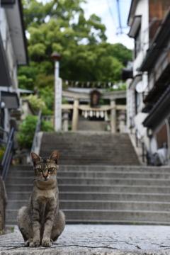 尾道市 映画「転校生」の階段