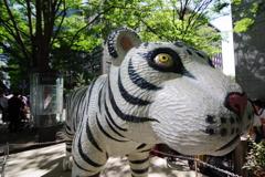 東京散歩 白虎