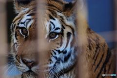 野毛山動物園 メイメイ 最後の一枚