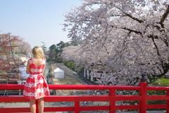弘前さくら祭り 赤い橋で号泣する赤い服を着た金髪の女性の後姿