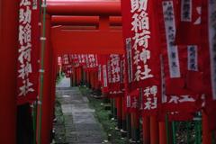 Kamakura散歩 佐助稲荷神社 鳥居