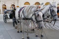 ウィーン1日目 シュテファン大聖堂周り お馬さん