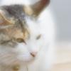 soft focusレンズで三渓園 猫
