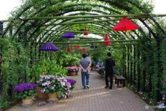 イングリッシュガーデン 紫陽花 (1)
