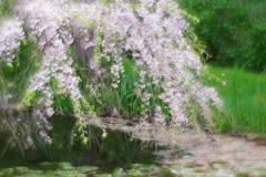 soft focusレンズで三渓園 池の上の桜