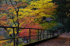 奥多摩湖 小河内神社への道 紅葉綺麗