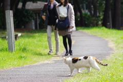 大井町埠頭公園 野良猫と桜 人が来た