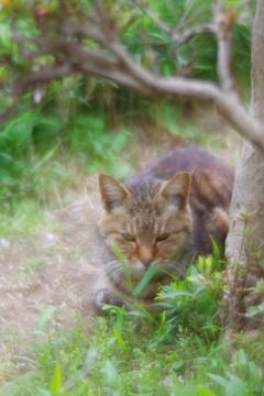 soft focusレンズで三渓園 野良猫