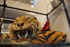 買ってはいけない トラ