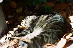 今日のノラ猫さん 32 フィルムにて