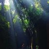 猿島 ラピュタの世界 インスタ栄えします
