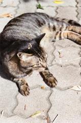 フィルム 金木犀 on 猫