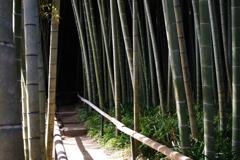 Kamakura散歩 英勝寺 竹林 カチッと撮ってみた