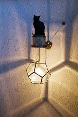 フィルム 大佛次郎記念館 猫の照明