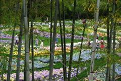 里山ガーデン2018 竹林から