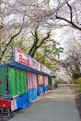 弘前さくら祭り どこでもさくらがいっぱいでした