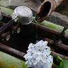 妙楽寺 紫陽花のお寺