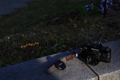 pentax MX + petri 50mm f1.7