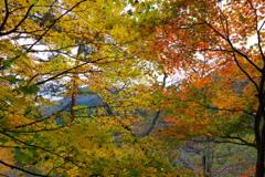 奥多摩湖 小河内神社 ほぼ全ての色があります