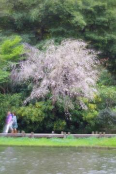 soft focusレンズで三渓園 桜と歩いている人たち