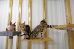 猫は高いところが好き