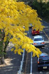 紅葉シーズンの宿命 東山動植物園