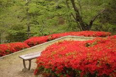 つつじが丘 赤に包まれたベンチ