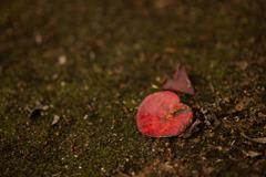 赤を探して 東山植物園