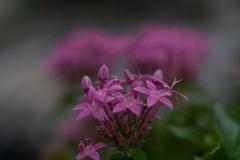 ピンク 小さなお花
