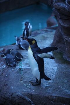ペンギンさん 東山動物園ナイトズー