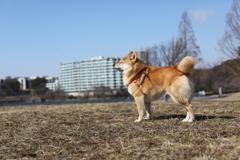 お昼のお散歩 風が冷たい!