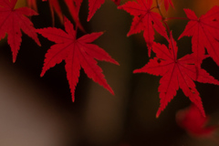 紅葉 オールドレンズ⑥