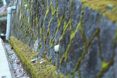 苔の石垣  新テーマ