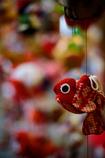 赤いべべ着た可愛い金魚♪