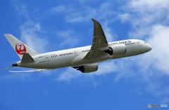 「SKY」 JAL 787-8 JA837J Takeoff