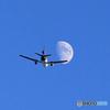 「青が大好き」 FedEx MD-11 Takeoff