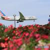 「はれー」 American 787-8 N805AN 青と赤