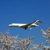 「SKY」桜と☮カタール・Bombardier BD-700 A7-CEE✈
