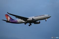 「晴れ」 Hawaian A330-243 N378HA 来た~