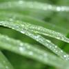 梅雨のキラキラ