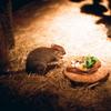 多摩動物園にて