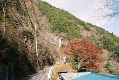 いろは楓の巨樹と東京都水道局小河内線の遺構