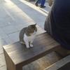 イスタンブールにゃん