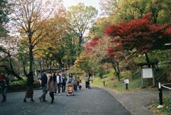 多摩動物園の紅葉